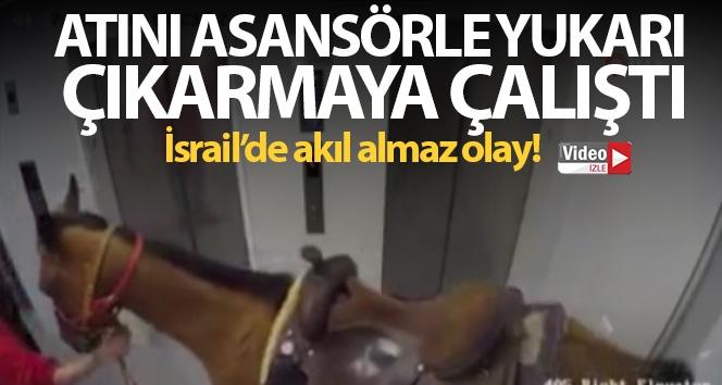 İsrail'de akıl almaz olay: Atını asansörle yukarı çıkarmaya çalıştı