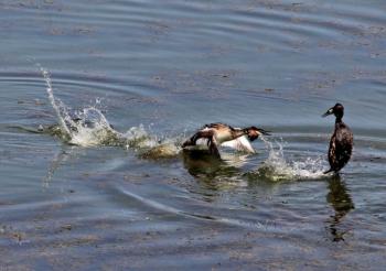 Azap Gölü'nde ekoturizm faaliyetleri yaygınlaşacak
