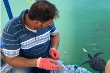 Carettalarla dost olan Mersinli balıkçılar, onları elleriyle besliyorlar