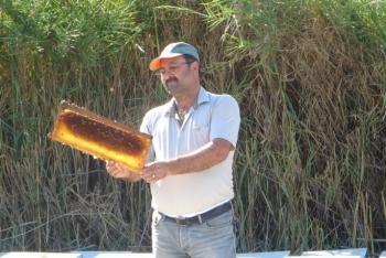 Eşek arıları, arıcıların ve vatandaşların kabusu oldu