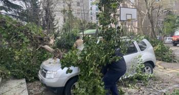 Park halindeki otomobillerin üzerine ağaç devrildi