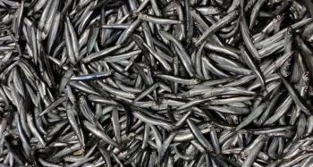 Yasak kararı ile hamsi tüketimi azaldı balıkçılar vatandaşlara seslendi
