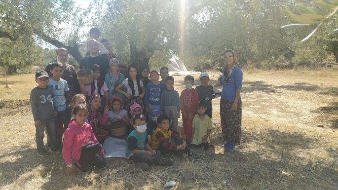 Minik öğrencilerden yöresel kıyafetlerle zeytin hasadı
