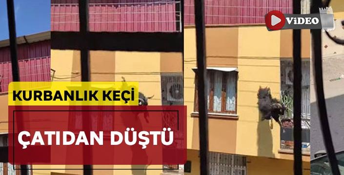 Adana'da kurbanlık keçi çatıdan düştü