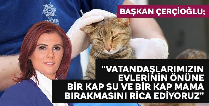 Aydın Büyükşehir Belediyesi can dostları yalnız bırakmıyor