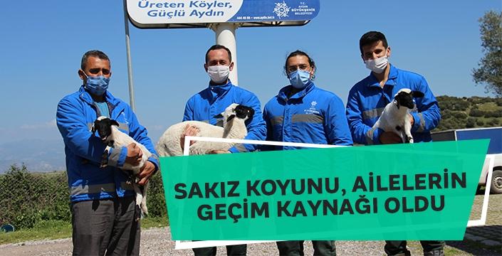 Aydın Büyükşehir Belediyesi'nin 'Aile Tipi Koyunculuk' projesi hız kesmeden sürüyor