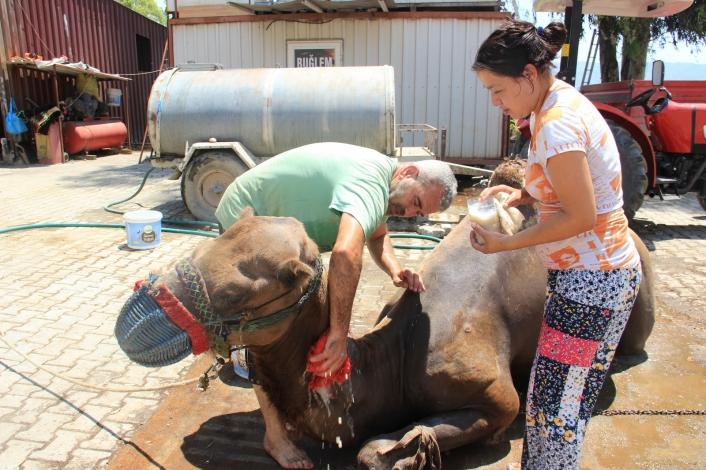 Aydın´daki çöl sıcaklarına karşı deveciler seferberlik ilan etti
