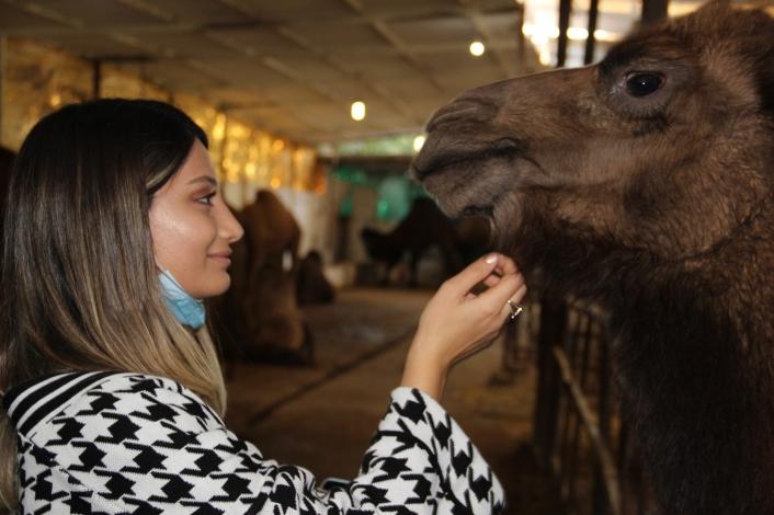 Ayşegül Öğretmen, develerle stres atıyor