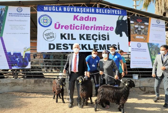 Büyükşehirden kırsaldaki kadınlara keçi desteği sürüyor
