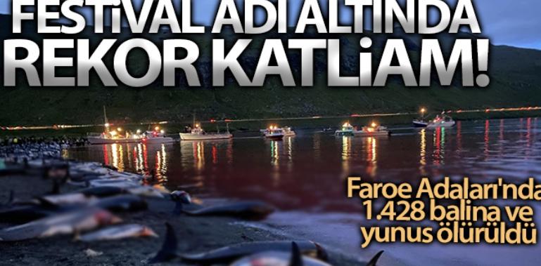 Faroe Adaları'ndaki 'festivalde' bin 428 balina ve yunus öldürüldü