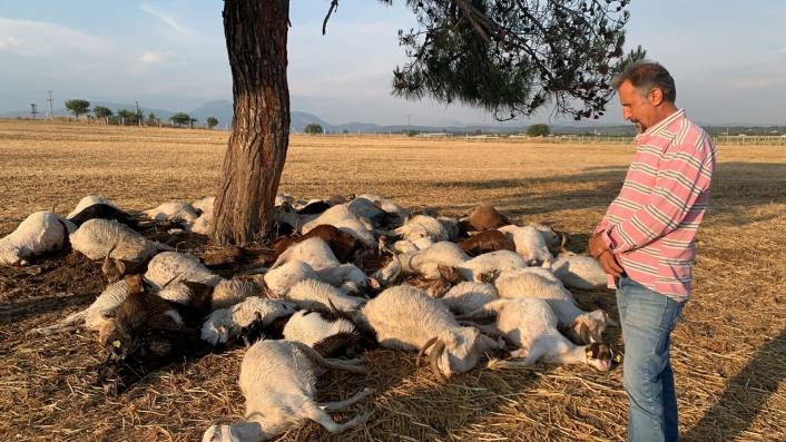 İzmir´de yıldırım düştü, 55 küçükbaş hayvan telef oldu
