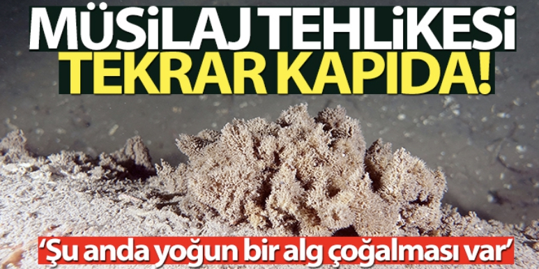 Marmara soğuyamıyor, müsilaj tehlikesi kapıda