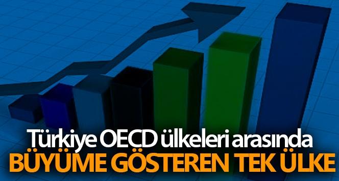 Türkiye OECD ülkeleri arasında büyüme gösteren tek ülke
