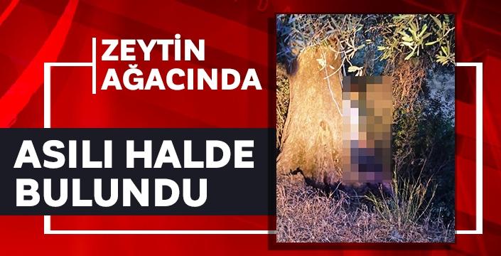 Zeytin ağacında asılı halde bulundu